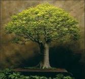 Keramet Ağacı