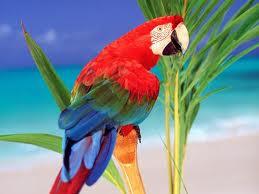 Papağanın Mutluluğu
